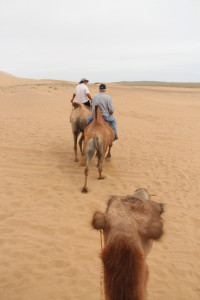 Camel Trek in Sand Dunes